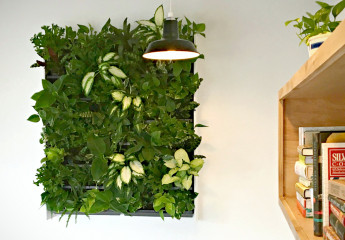 Acre Restaurant green wall