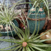 Oakland INSIDE & OUT - Air Plants