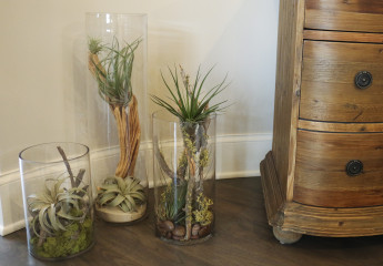 Custom Design w/ airplants
