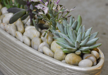 Succulent Container Rotation